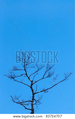 Top Of Bare Tree On Clear Blue Sky