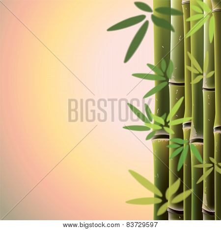 Bamboo Trees And Leaves At Sunste Time.