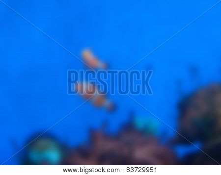 Natural Bright Blurred Background Of Yellow Clownfish.