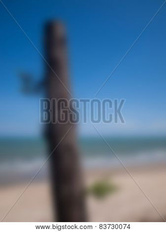 Natural Bright Blurred Background Of Pine Tree And Sea.
