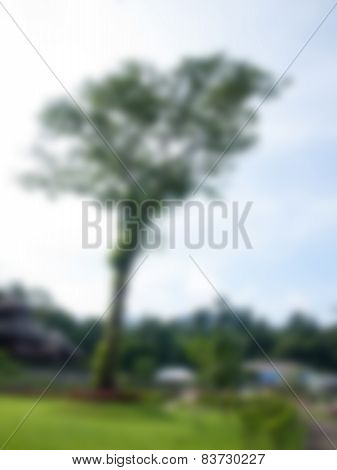 Natural Bright Blurred Background Of Big Tree.