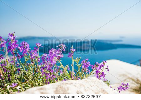 Purple Flowers In The Garden With Sea View
