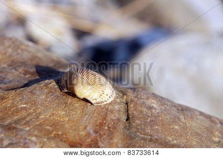 Sea Shell Laying On The Stone Near The Seashore
