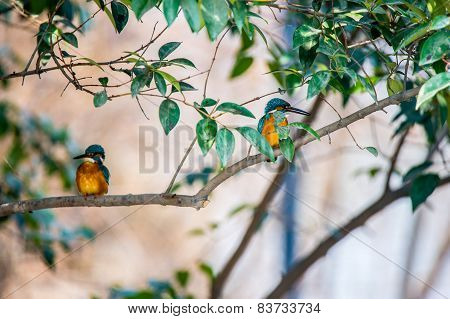 A couple of colourful birds watching each other