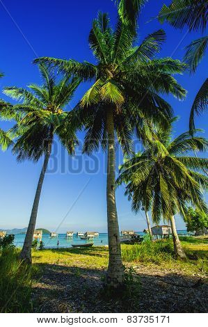 meadows and coconut trees