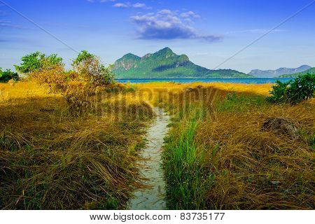 lane through the bushes on the island