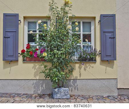windows and flowers Altenburg Germany