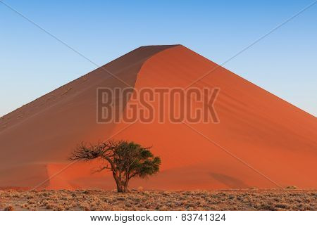 Spectacular Red Sanddune Centered Sunset Sossusvlei
