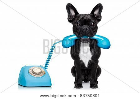 Dog Telephone Phone