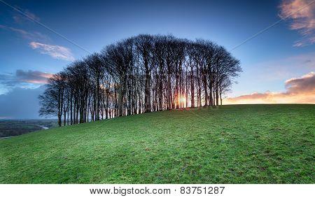 Sunrise Through Beech Trees