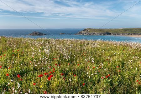 Cornish Wildflower Meadow
