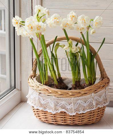 White Daffodils In A Basket.