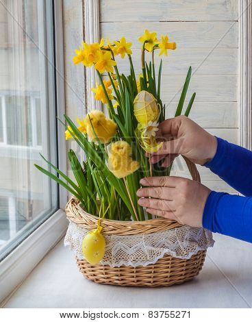 Female Hands Decorated By Easter Basket Of Narcissuses
