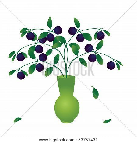 Blueberry Branch