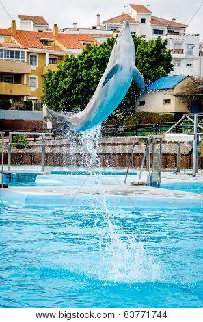 Dolphins show in Selwo Marina in Benalmadena, Malaga.