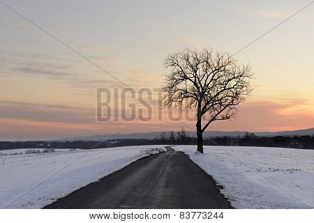 Tree along Road with Snow Covered Fields