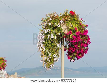 Beautiful display of pink white and red petunias on a pole summer day at the coast