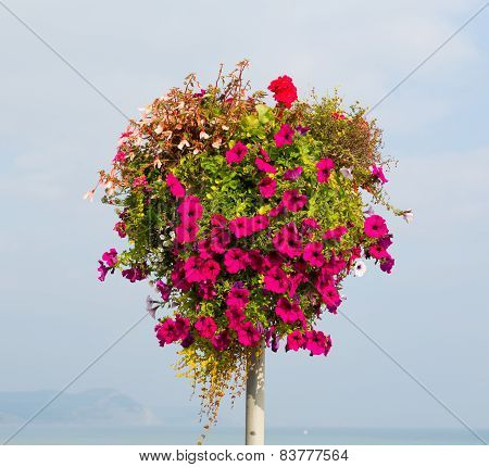 Beautiful display of pink petunias on a pole summer day at the coast