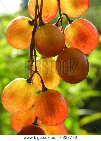 red transparent grapes
