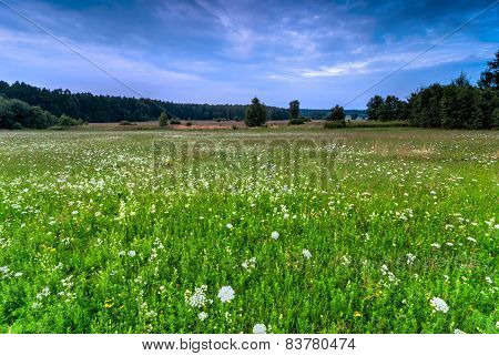 Wild Meadow Background