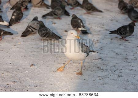 Bird General