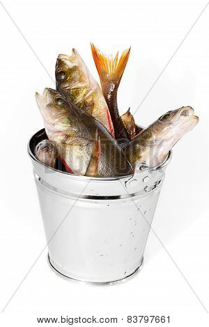 Fish In A Bucket On A White Background