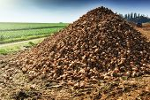 foto of sugar industry  - Pile of harvested sugar beet on agricultural field - JPG