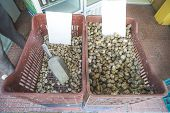 picture of piraeus  - Snails in a crate on the market - JPG