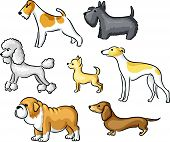 picture of hound dog  - Set of cartoon dogs of different breeds - JPG