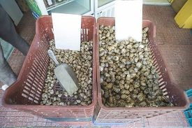 foto of piraeus  - Snails in a crate on the market - JPG
