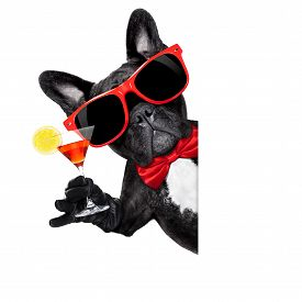 stock photo of bulldog  - french bulldog dog holding martini cocktail glass ready to have fun and partybehind a white blank banner or placard isolated on white background - JPG