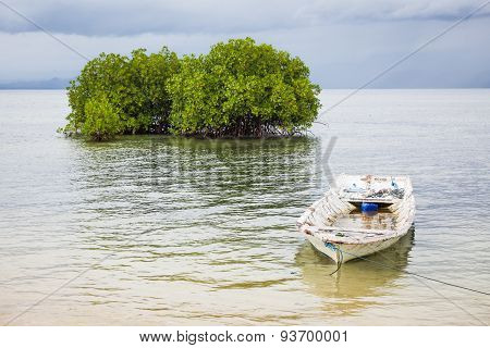 Mangrove tree and boat in water