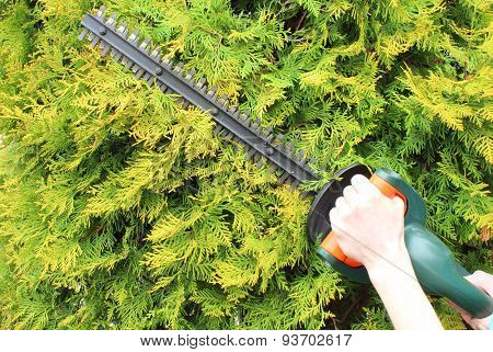 Hands Of Woman With A Gas Powered Hedge Trimmer