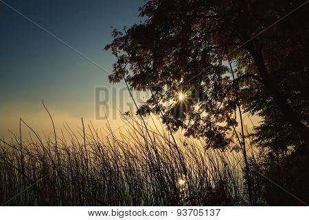 Moody morning at lakeside