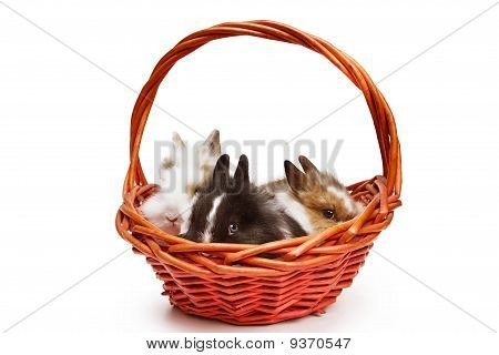 Three little rabbits in red basket
