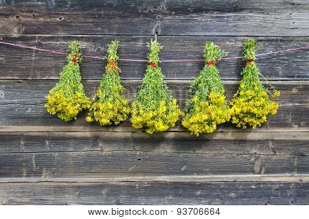 Five Bunch Fresh Medical Herbs St John's Wort Hang On Wooden Wall