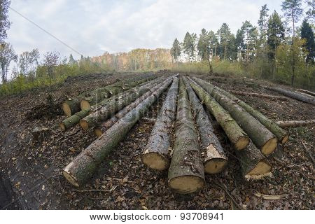 Forest Managment