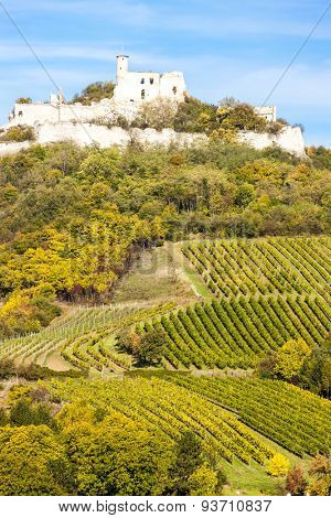 ruins of Falkenstein Castle with vineyard in autumn, Lower Austria, Austria