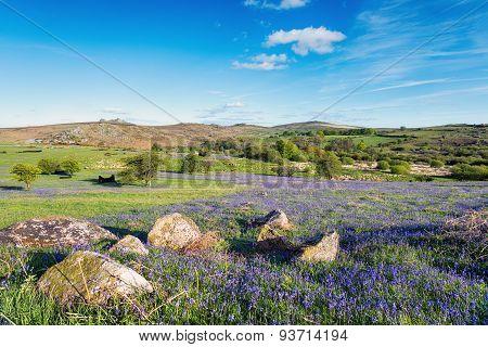 Holwell Lawn On Dartmoor