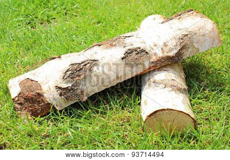 Stack Of Cut Logs Firewood From Silver Birch Tree
