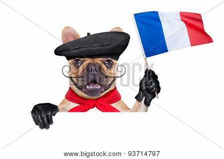 French Wine Dog