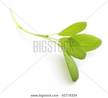 Fresh sage leaves isolated on white background