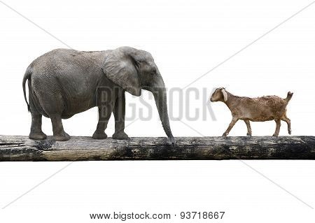 Elephant And Sheep Walking Over The Single Wooden Bridge