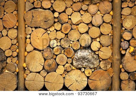Cross Section Of The Timber For The Background.
