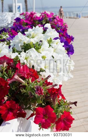Pretty Floral Arrangement On The Background Of A Summer Recreation Area On The Beach, Sunny Day In B