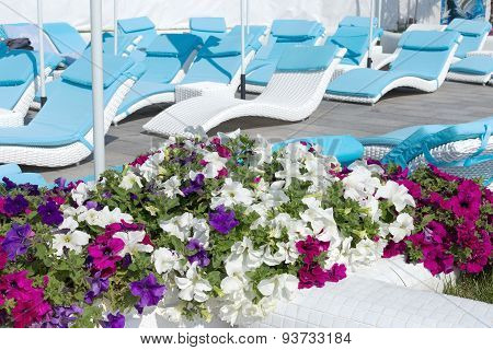 View Summer Urban Elite Cafes In A Recreation Area On The Beach, Decorated With Richly Blooming Flow