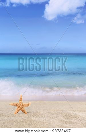 Beach Background Scene In Summer On Vacation With Sea Star