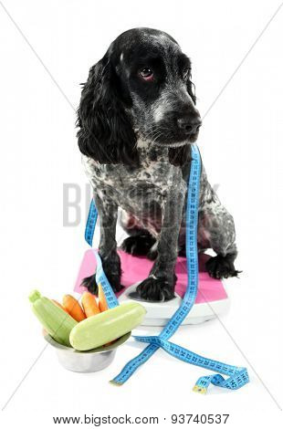 Dog on scale near bowl of fresh vegetables, isolated on white