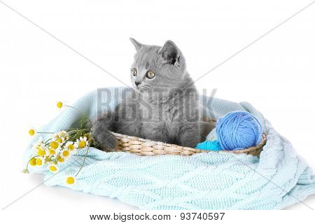 Cute gray kitten on plaid with chamomiles and skein of thread isolated on white