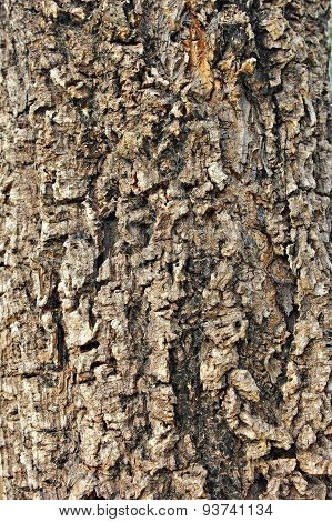 Tree Brown Bark Texture In Nature